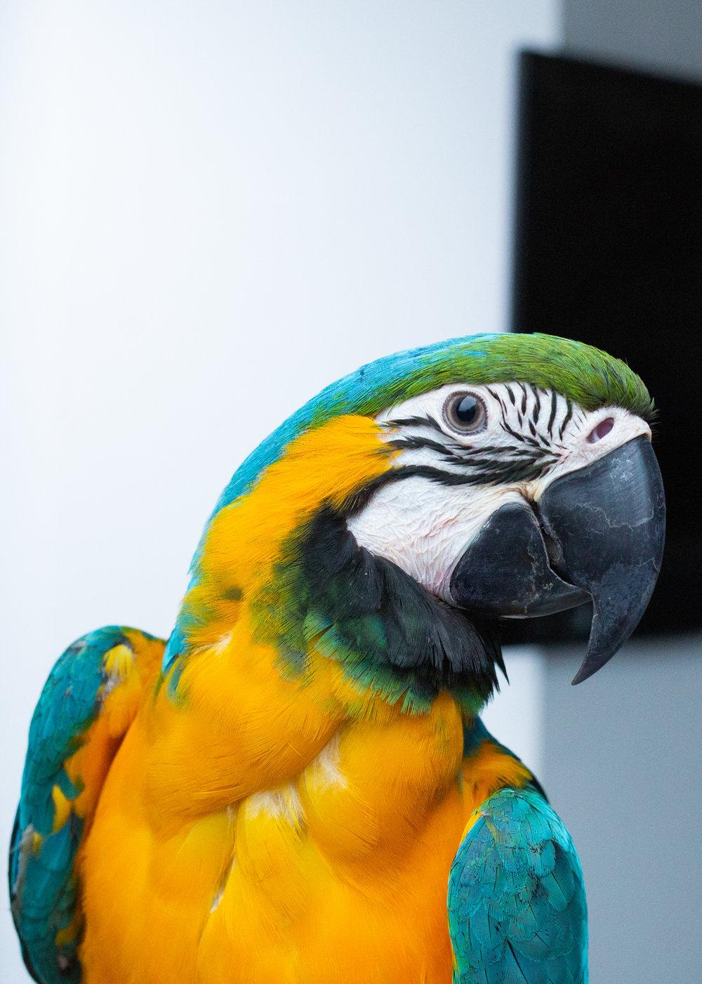 Macaws-7.jpg