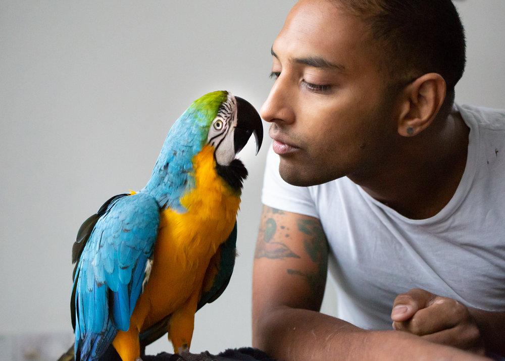 Macaws-10.jpg