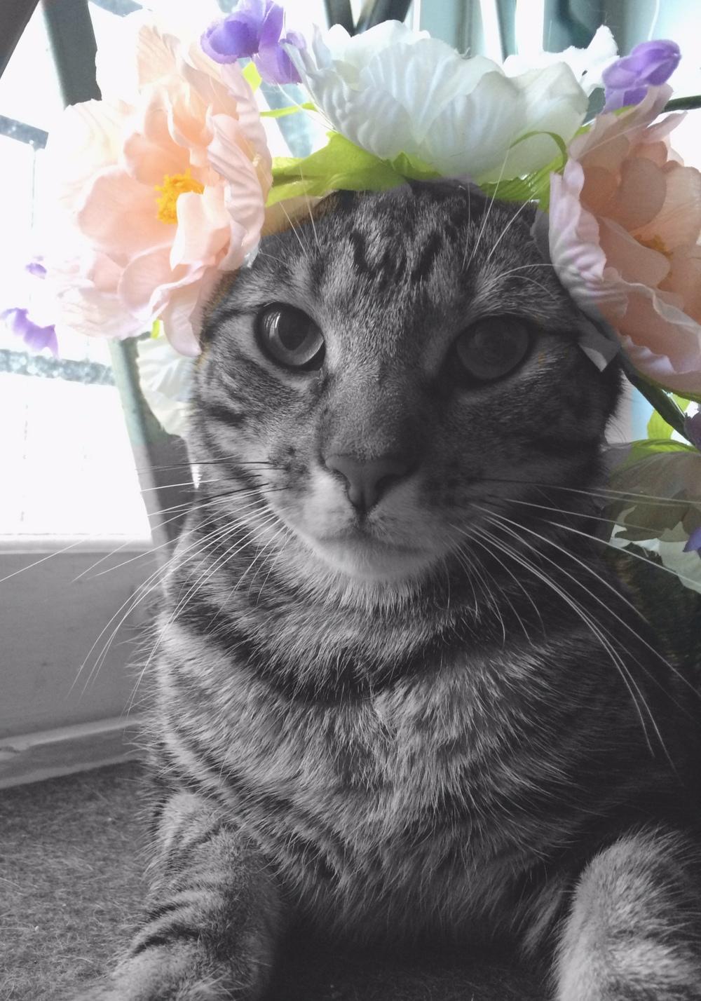 harris flower.jpg