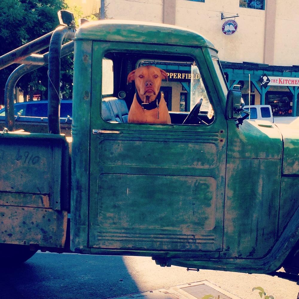 truck pitbull.jpg