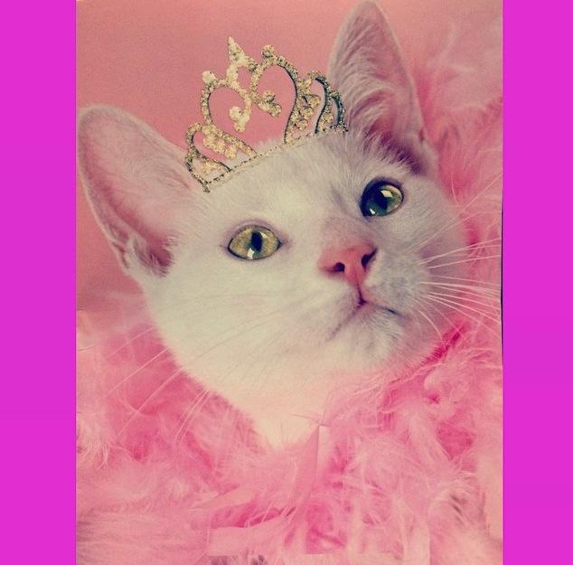 cat pink princess.jpg