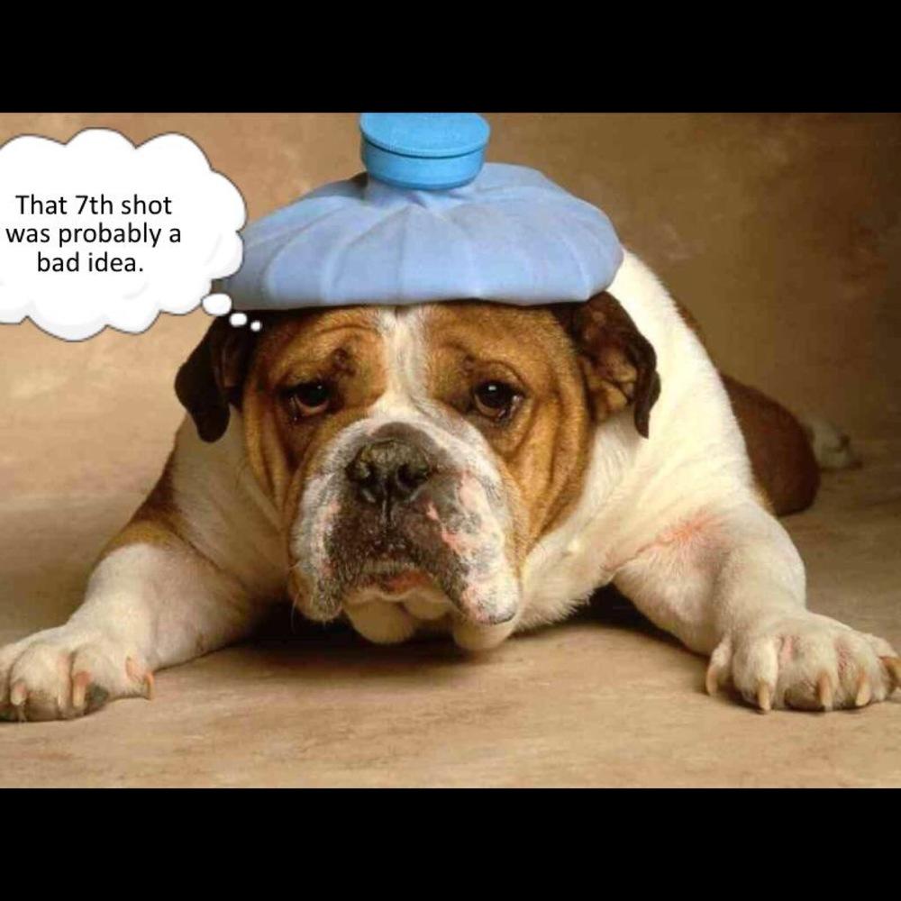 dog hangover.jpg