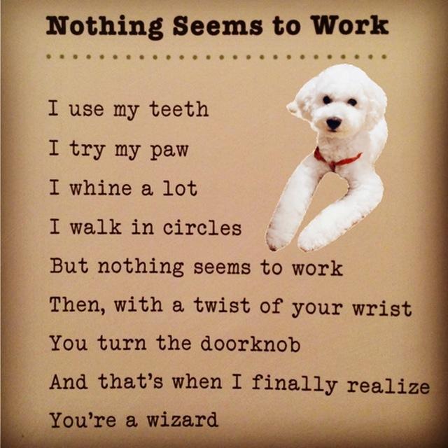 dog poem.jpg