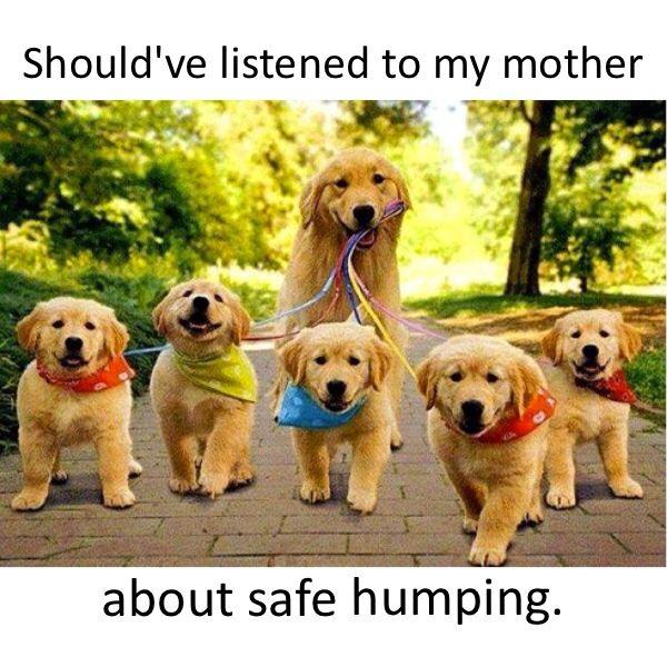 safe humping.jpg