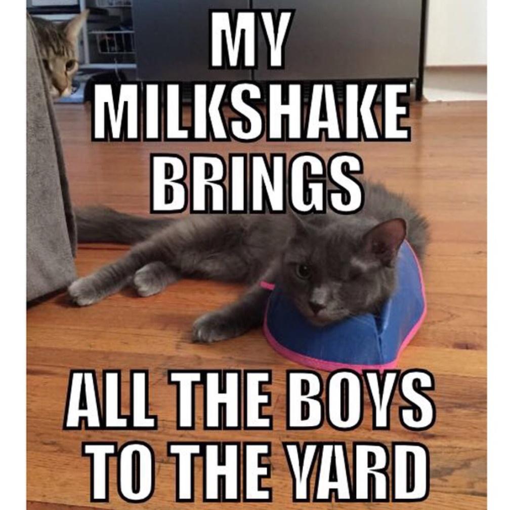 my milkshake.jpg