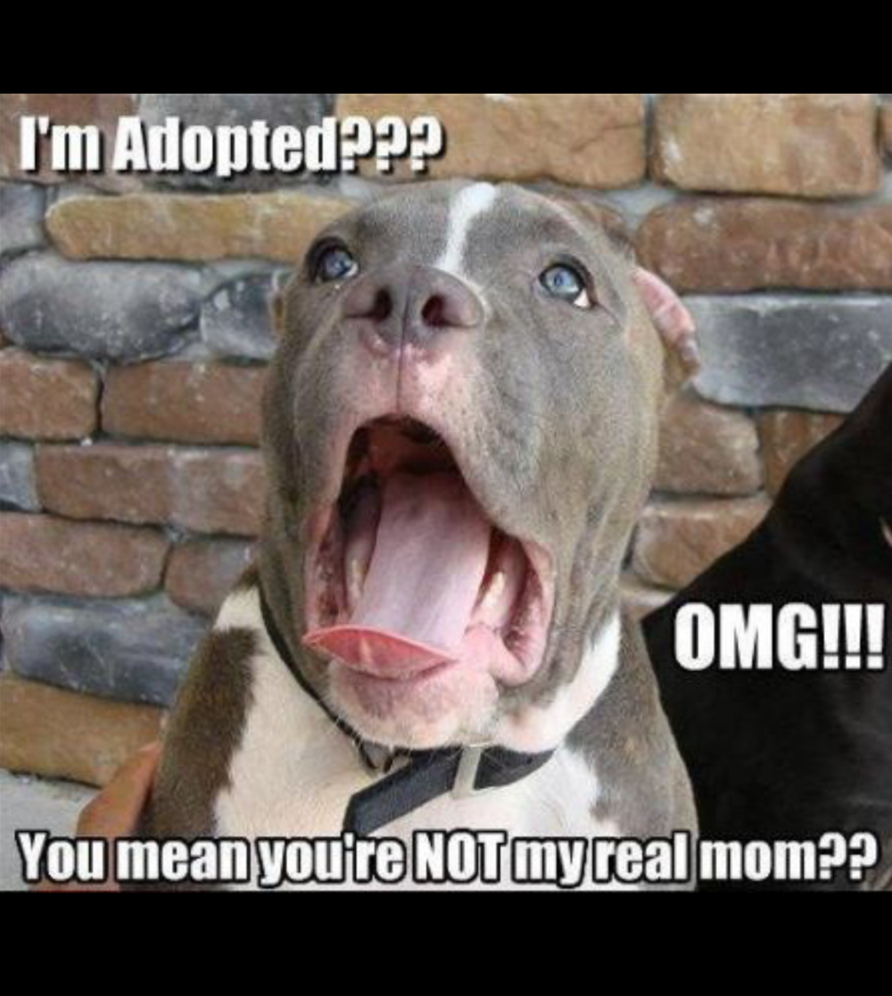 im adopted?!?.png