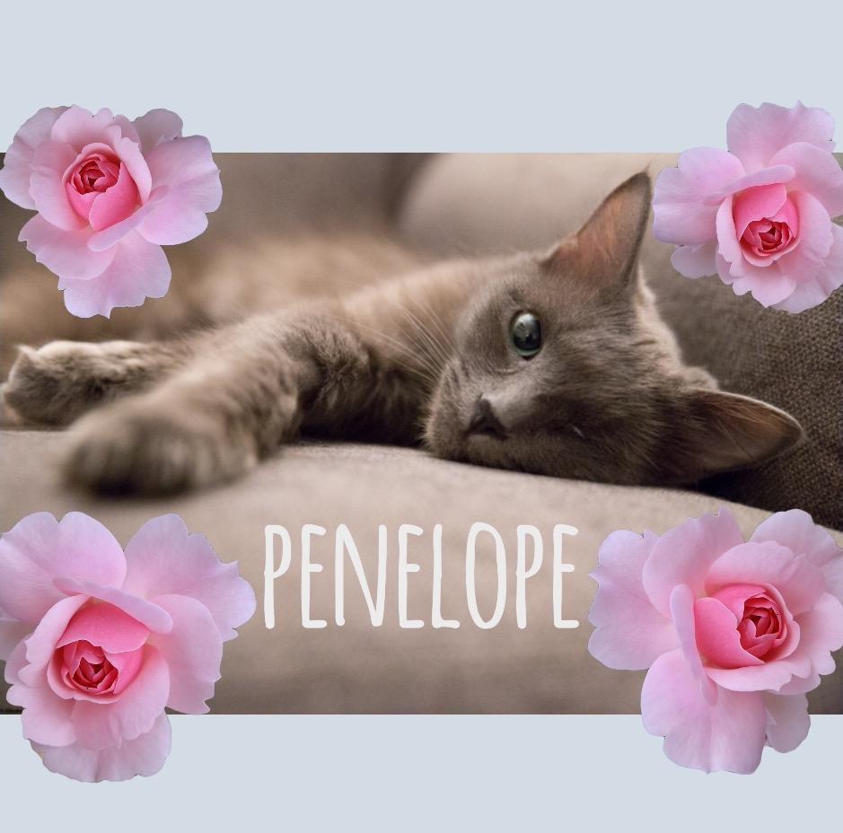 penelope wcw.jpg