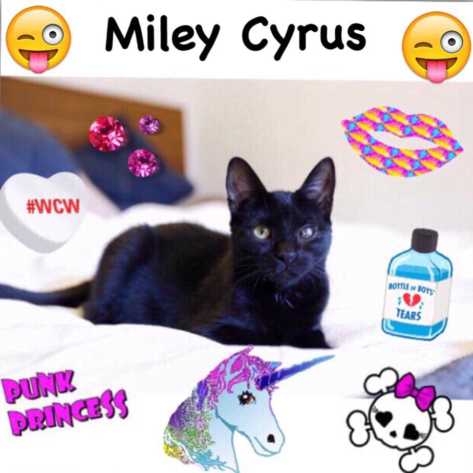 Miley Cyrus insta.jpg