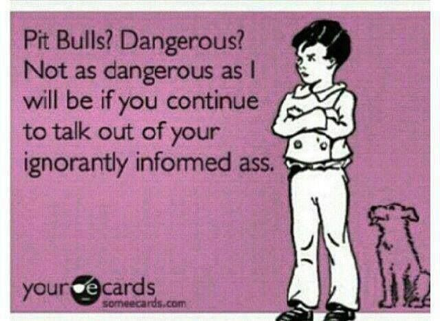 comic pit bulls.jpg