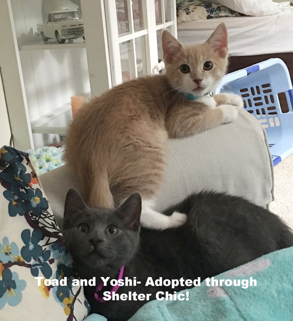 Toad and Yoshi Adopted.JPG