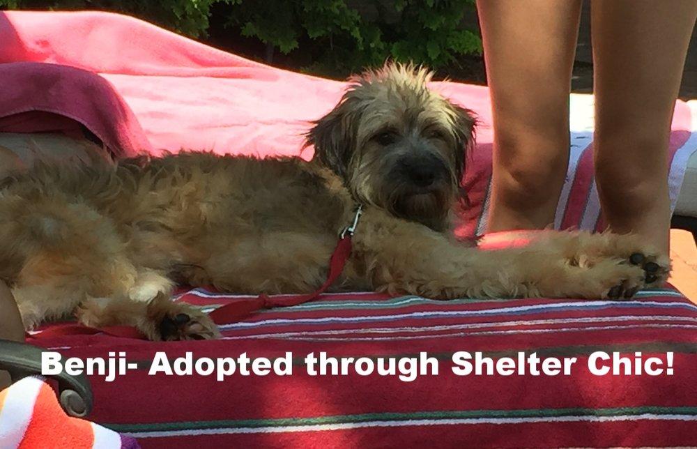 Benji Adopted.PNG