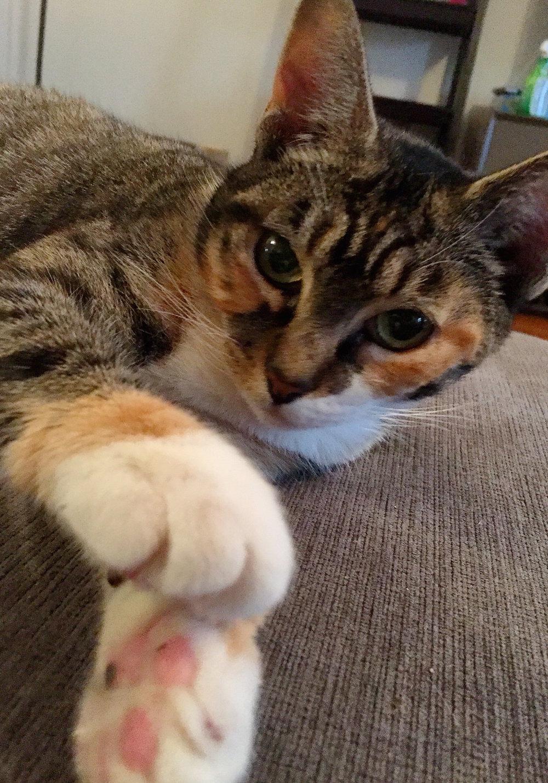 Callie cute.JPG