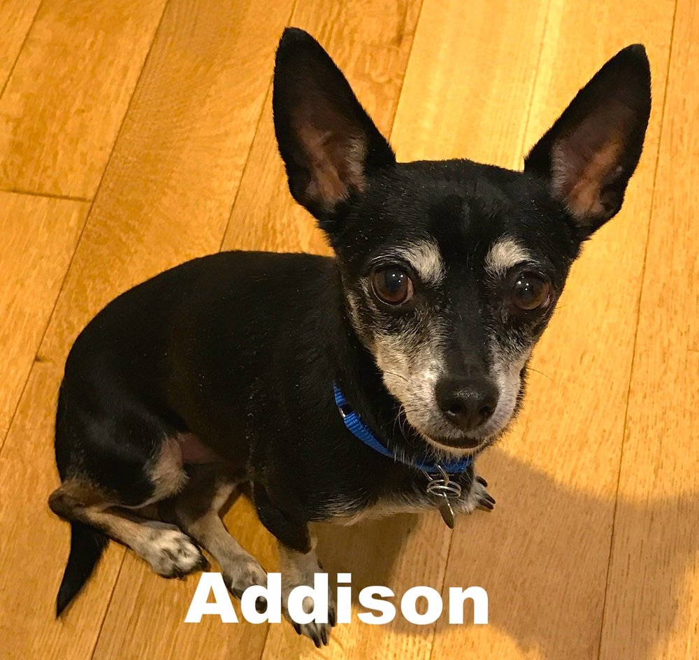 Addison.JPG