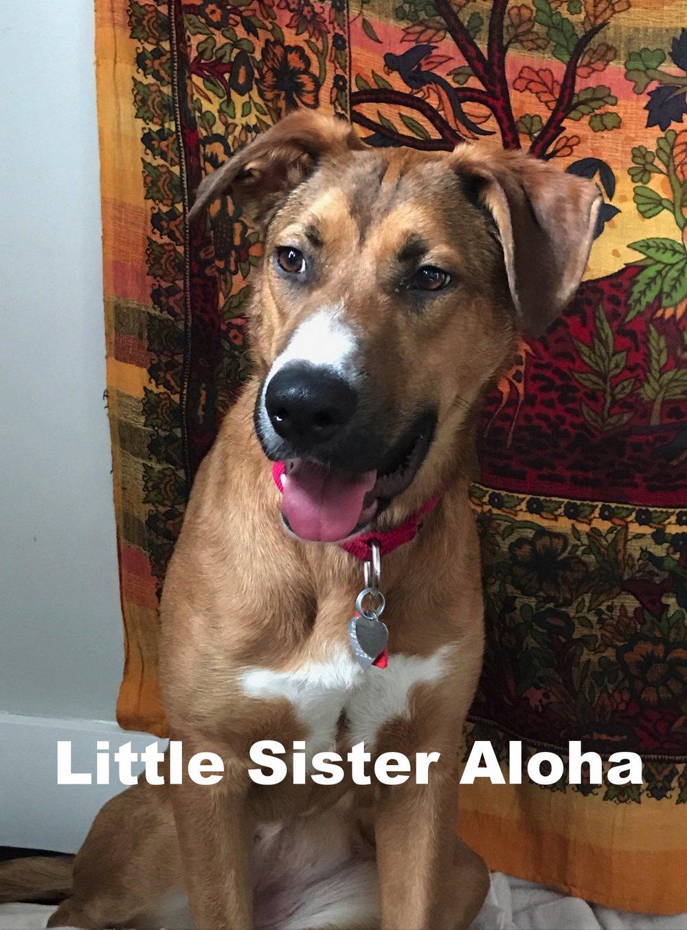 aloha so pretty 2.JPG