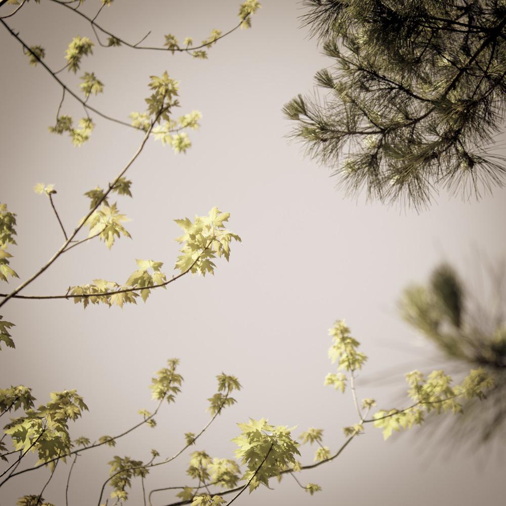 Spring #9