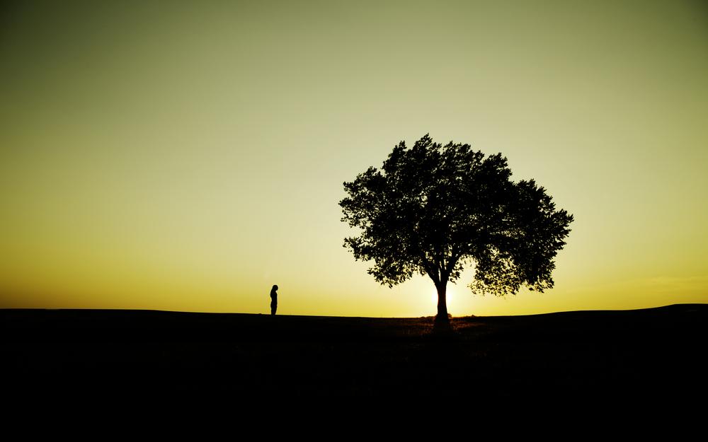 TreeSilhouette8x5.jpg