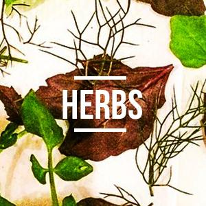 square_herbs.jpg