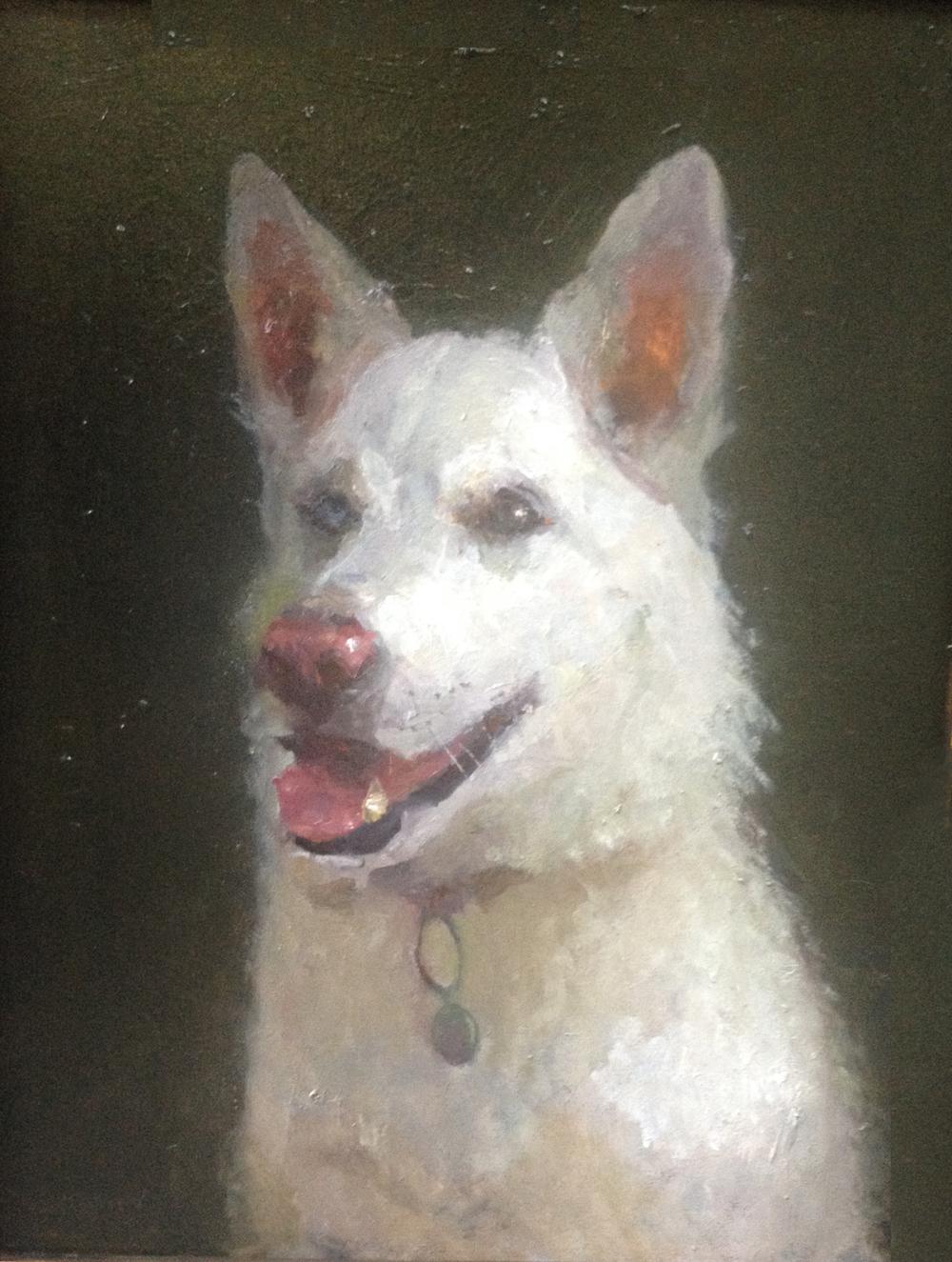 white dog1.jpg