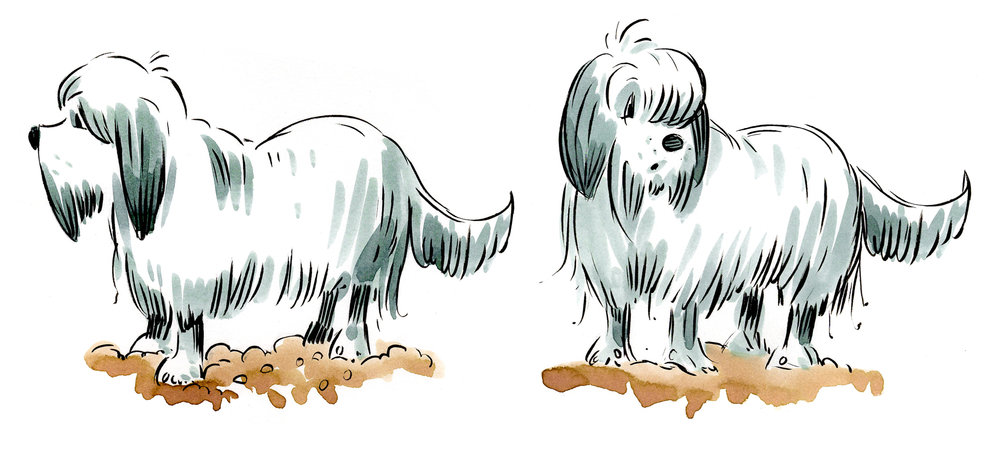 More detailed watercolor studies, for the big sheepdog, another of Tiny's hecklers.