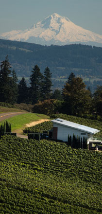 Widerlea Vineyard and Winery