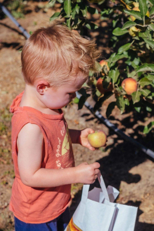Apple Picking-11.jpg