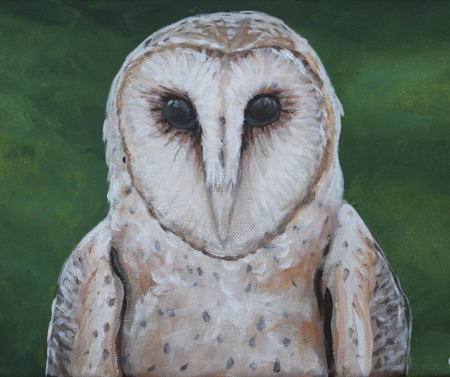 Barn Owl - acrylic on canvas, 20x25cm, 2014