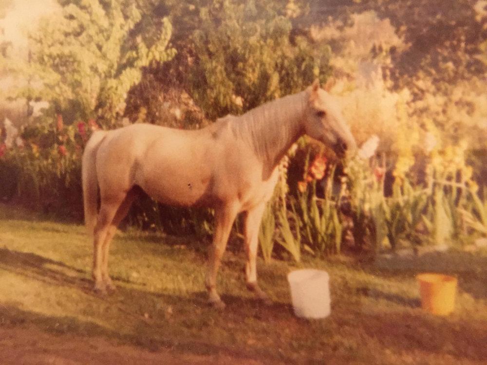 Gills horse.JPG