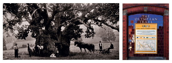 The Newland Oak