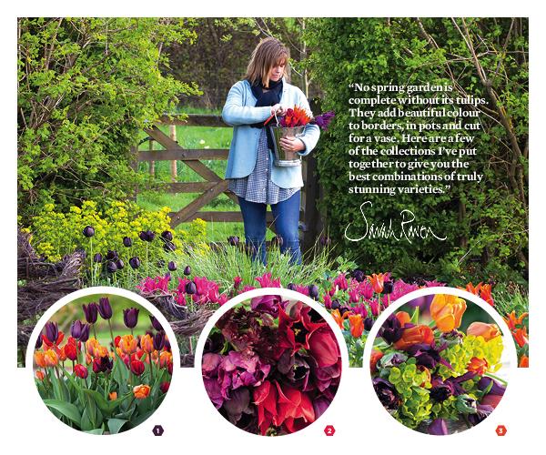 Sarah Raven tulip offer