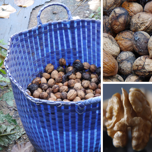 Wonderful walnuts