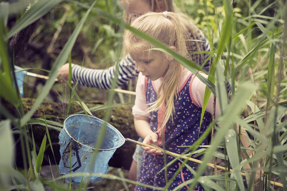 Ponddipping5.jpg