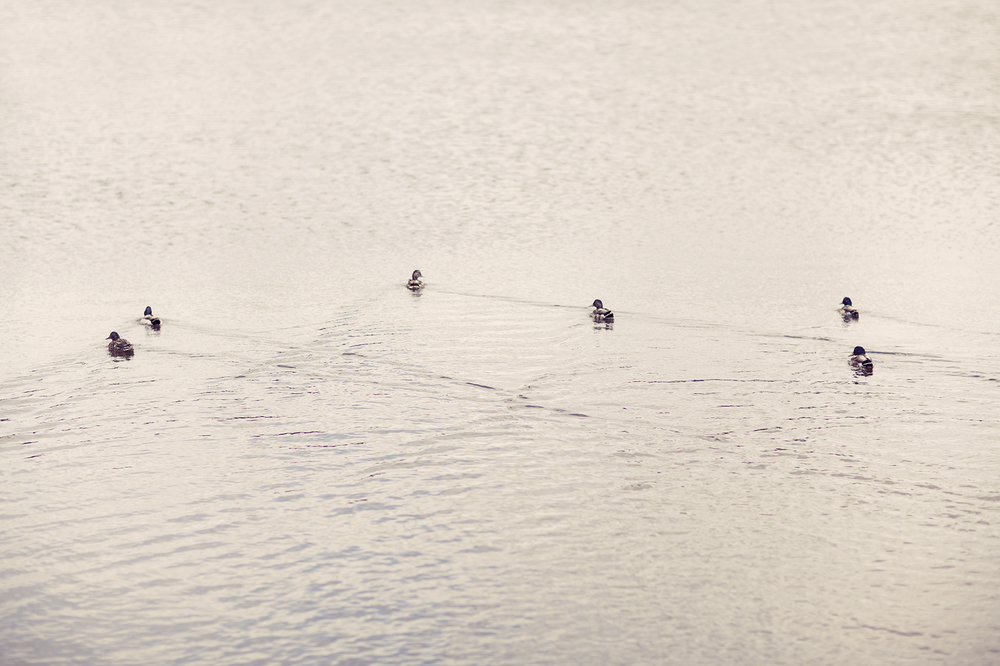 Ponddipping1.jpg