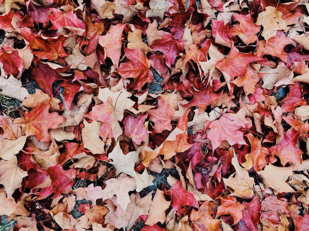 could do list for autumn.jpg