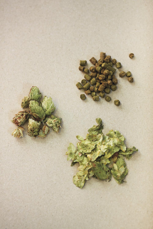 For bryggere flest er det mest vanlig å håndtere humlen i presset form eller som pellets.