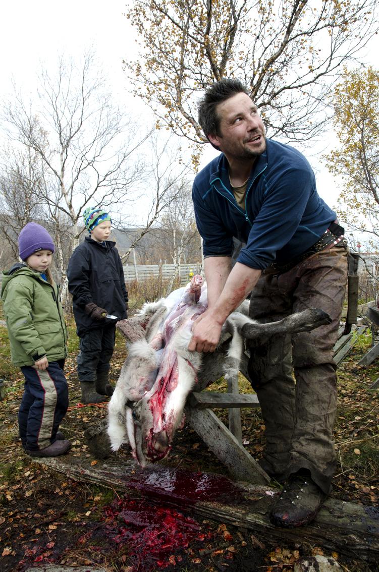 Nils Jovnna Eira Meløy får hjelp av ungene når reinen skal flås og parteres.