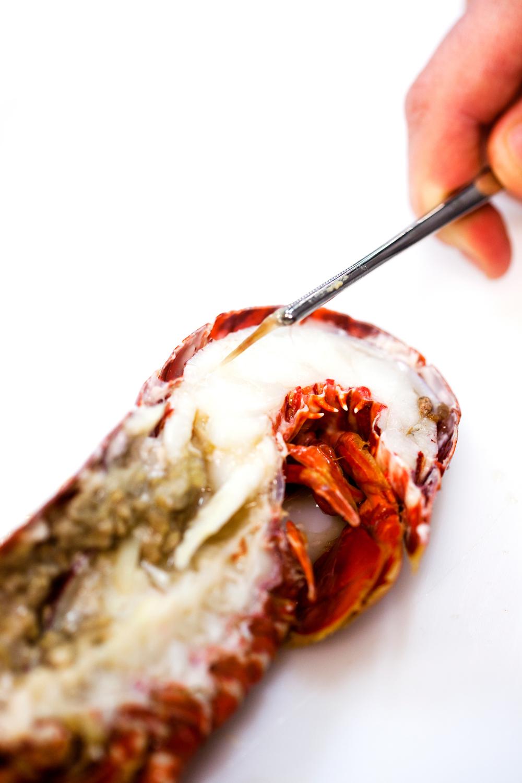 7. Løft forsiktig ut tarmen med en matpinsett.