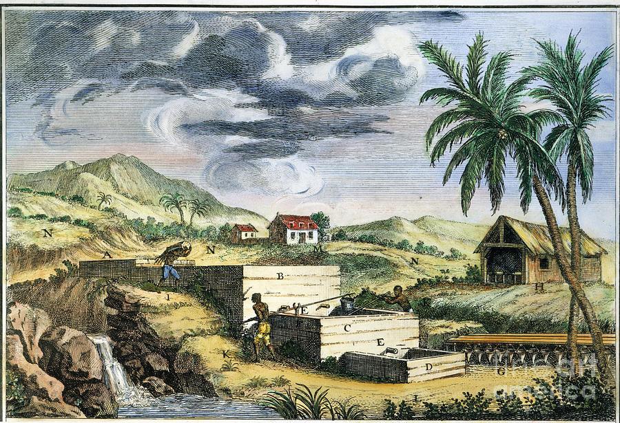 Indigo plantation, by Charles Henry Granger