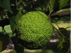 Plant Biology | NURJ
