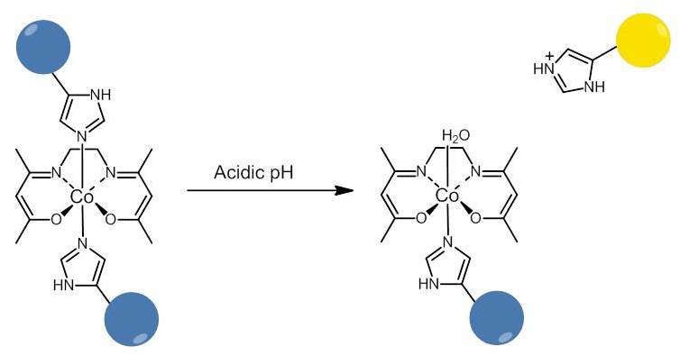 Figure 4. A self-reporting, activatable cobalt complex. Under neutral conditions, the drug is inactive and non-fluorescent. Upon exposure to acidic conditions, the axial imidazole becomes protonated, dissociates, and drug activity and fluorescence is restored.