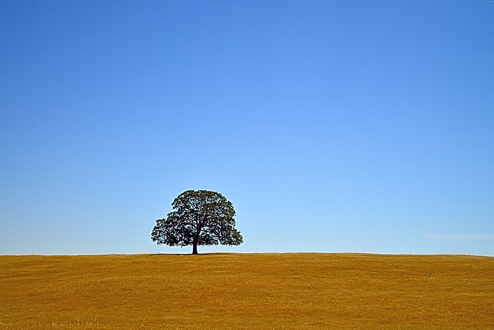 Blue Oak by Richard Douse