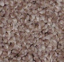 Ballerina 00882 Hushed Rose Carpet