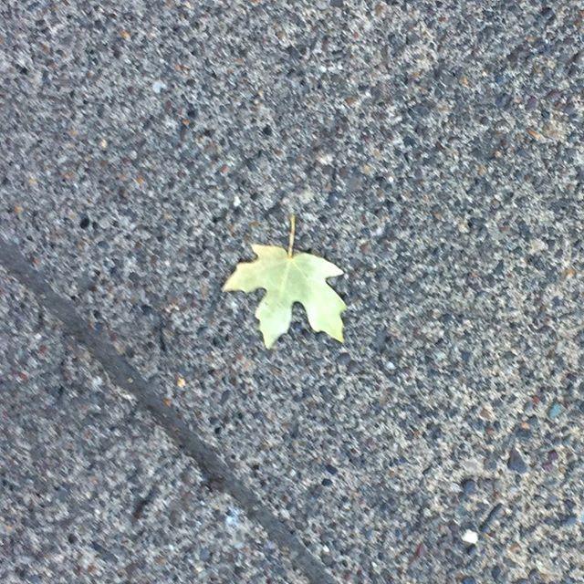 Fall is coming!  Front sidewalk art begins...