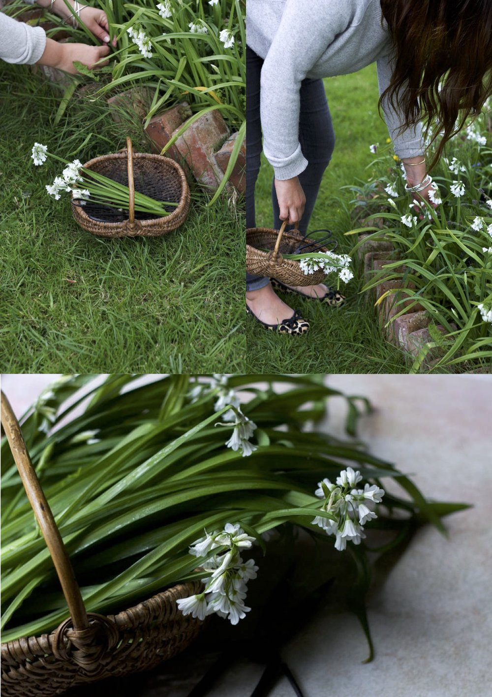 Jette Virdi, food stylist and photographer based in London, Dublin and New Zealand - wild garlic recipes