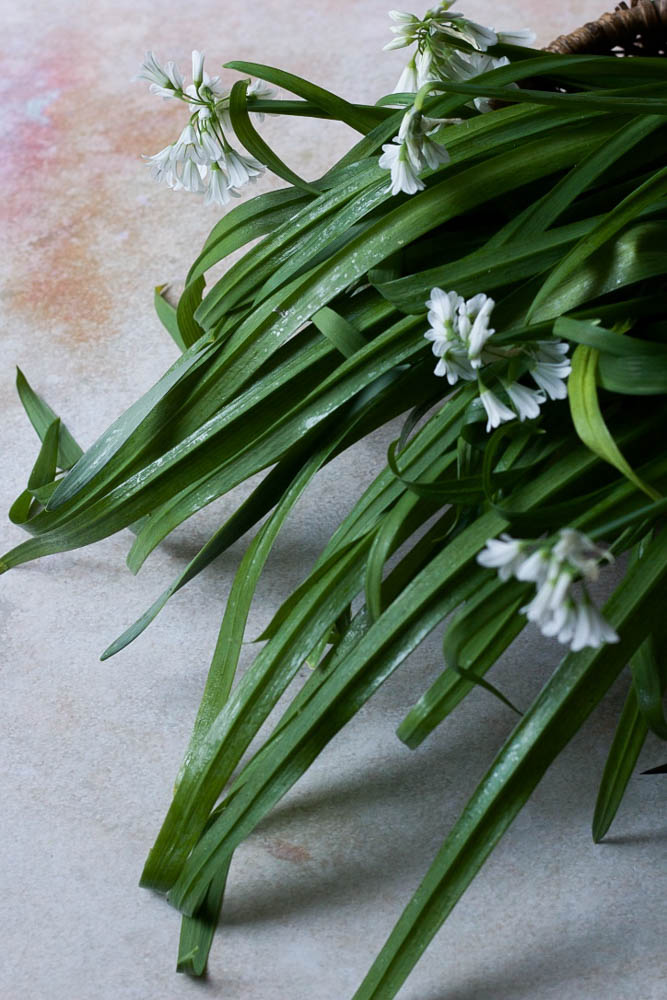 Wild garlic styled and shot by Jette Virdi, food stylist and photographer based in Dublin and London