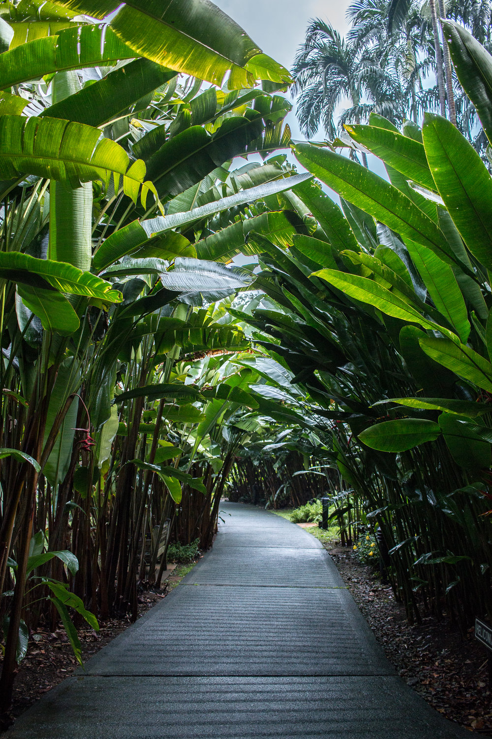 Heliconia Avenue at Singapores Botanical Gardens