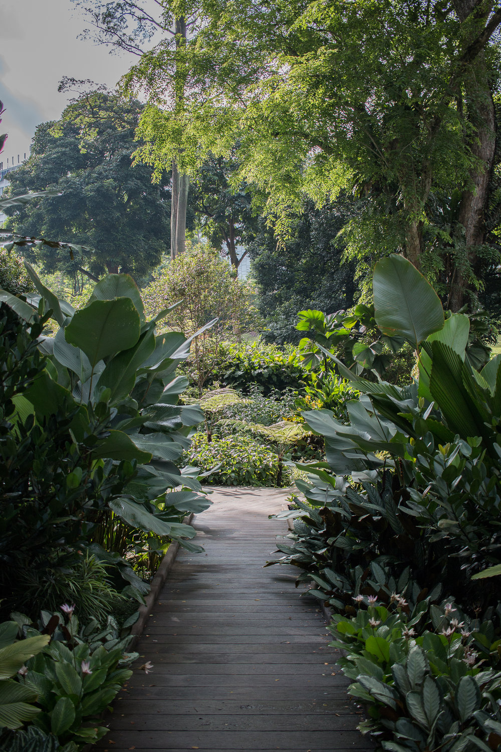 Botanical gardens photographed by Jette Virdi in Singapore