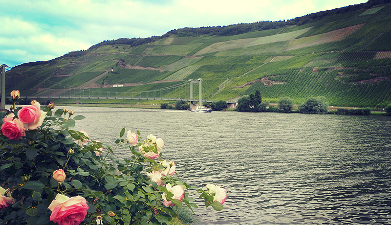 3 German Wine Regions Oenophiles Must Visit This Fall Forbes Travel Guide, Sept 8 2016