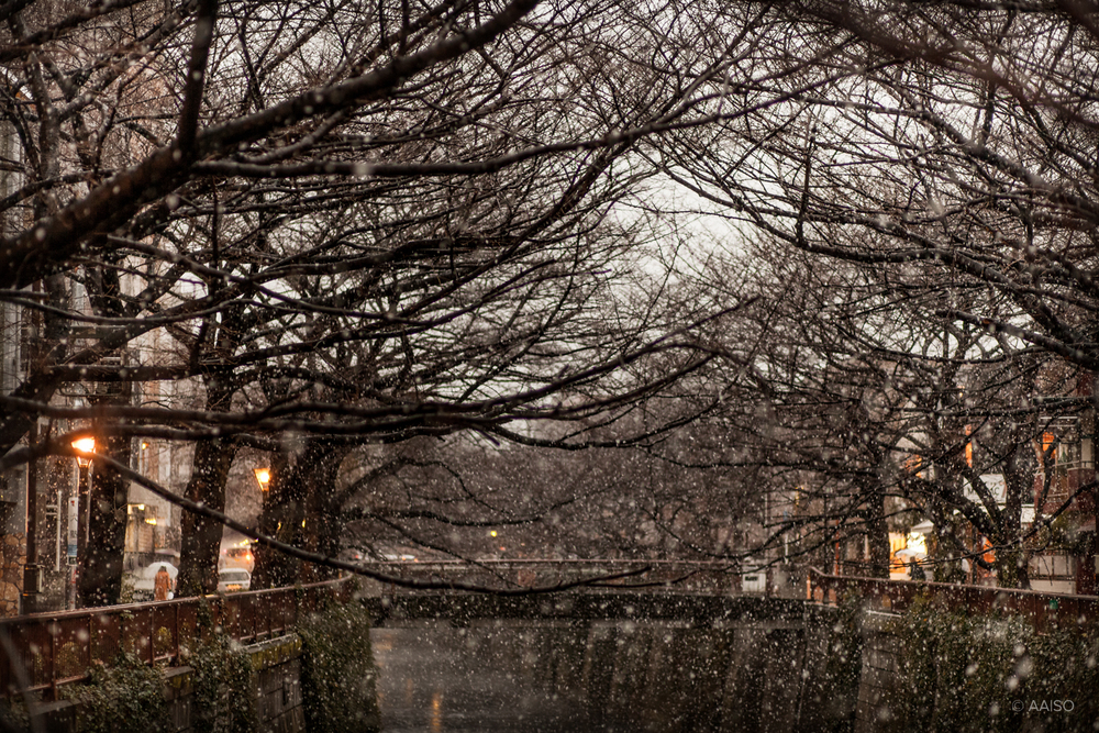 Winter view of the Meguro river with snow falling quitely