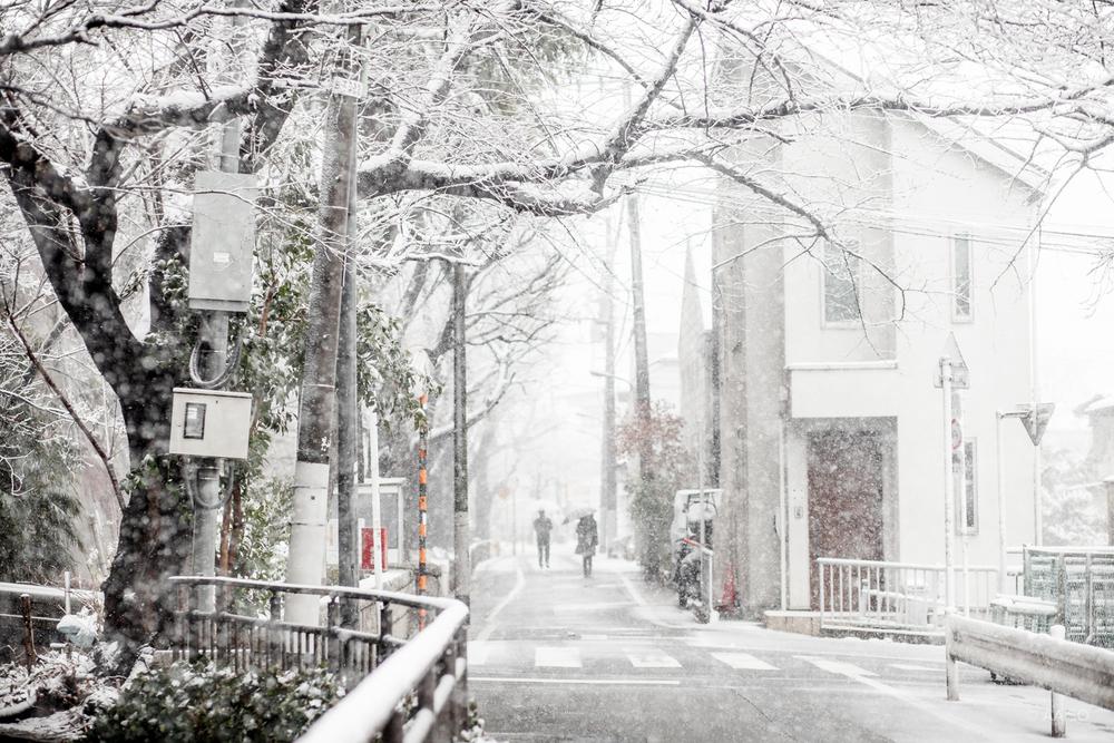 Winter Wonderland in Tokyo