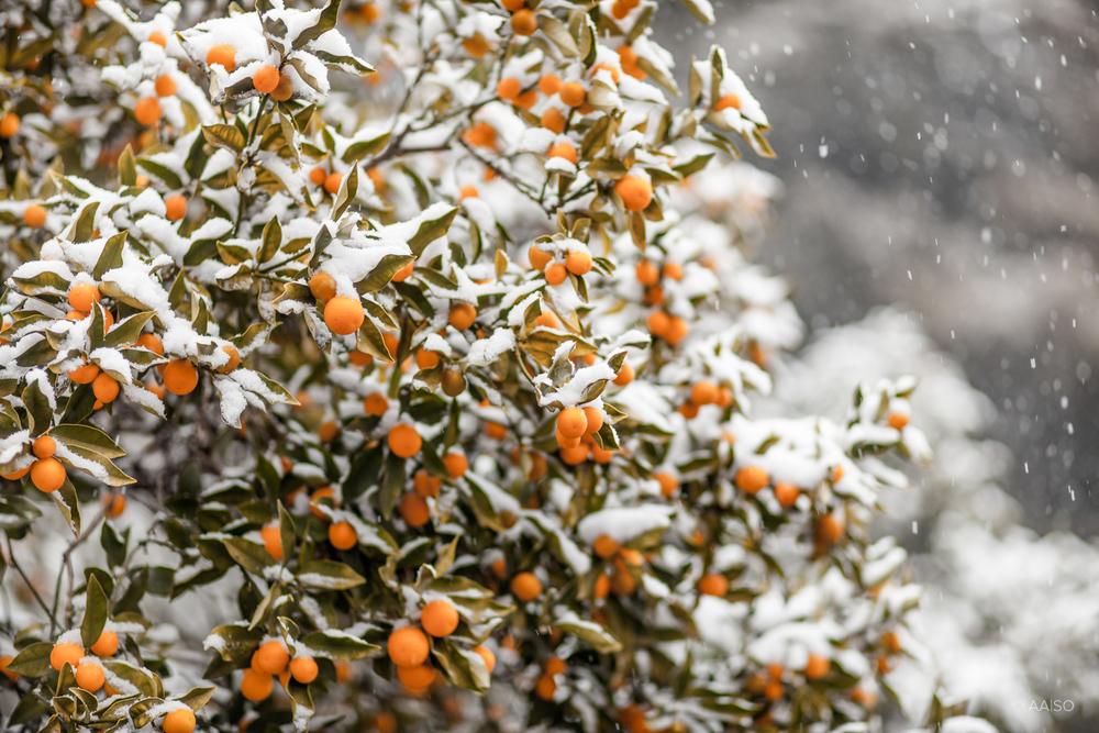 winterintokyo8059.jpg